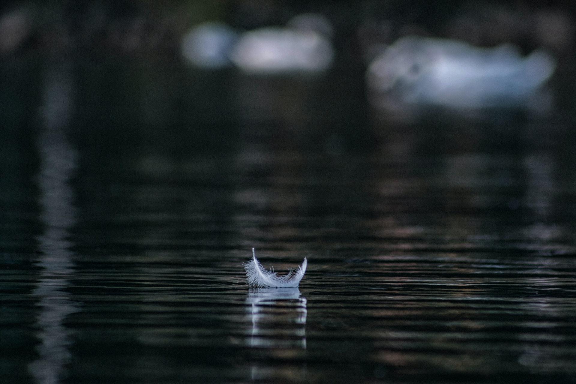 flottaison